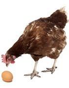 Comprar online producto para aves