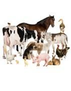 Comprar online productos para ganado