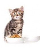 Comprar online pienso gatos