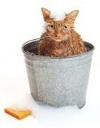 Los mejores productos de higiene para tu gato - Gaherproga