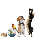 Comprar online productos para mascotas