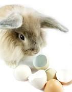 Comprar online productos pequeños animales