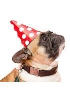 Comprar online accesorios perros