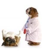 Salud e higiene de los perros